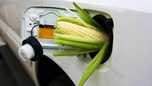 Создание пилотных кластеров фермерских хозяйств нового типа, осуществляющих деятельность в сфере биотехнологий