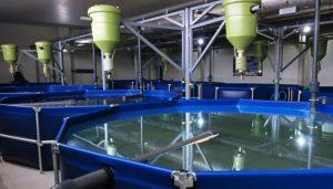 Содействие развитию высокотехнологичных предприятий аквакультуры